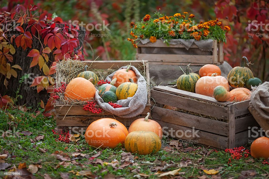 Зumpkins lying with a wooden box. Autumn time stock photo