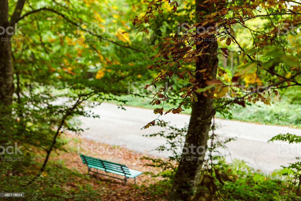 Una panchina nel bosco. stock photo