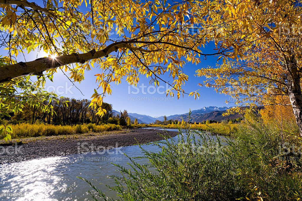 Uncompaghre River in Ridgway Colorado Autumn Fall Colors stock photo
