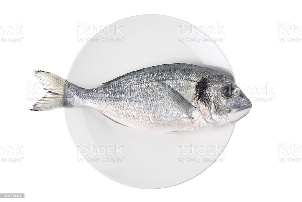 Uncooked fish (sparus auratus)on a plate royalty-free stock photo