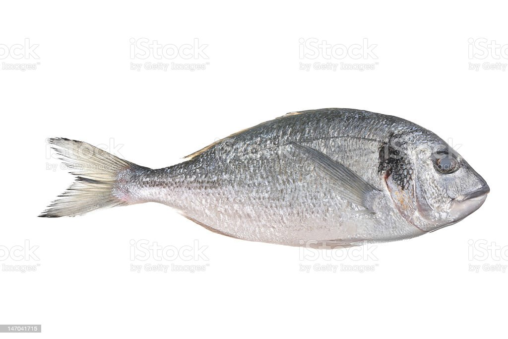 Uncooked fish (sparus auratus) royalty-free stock photo