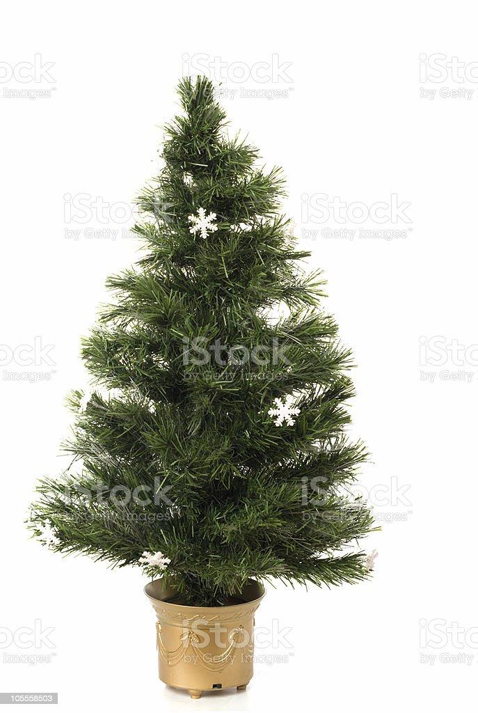 Undecorated Christmas tree royalty-free stock photo