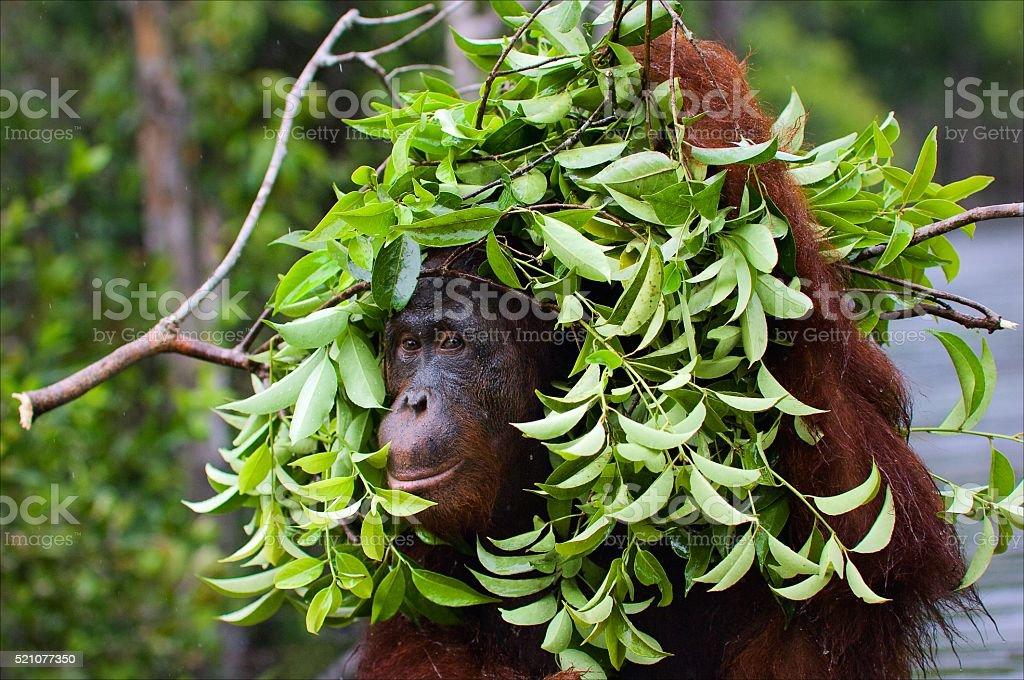 Under an ecological umbrella. stock photo