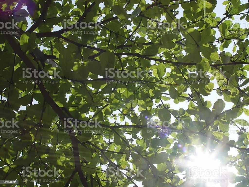 Under Foliage royalty-free stock photo