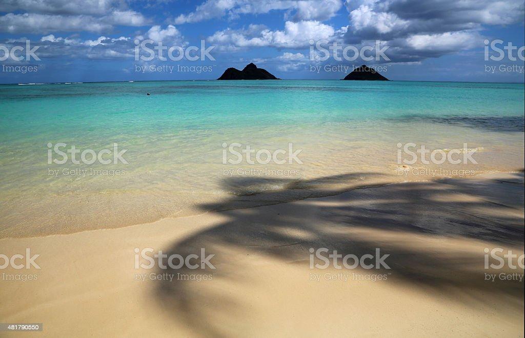 Under palm tree on Lanikai Beach stock photo