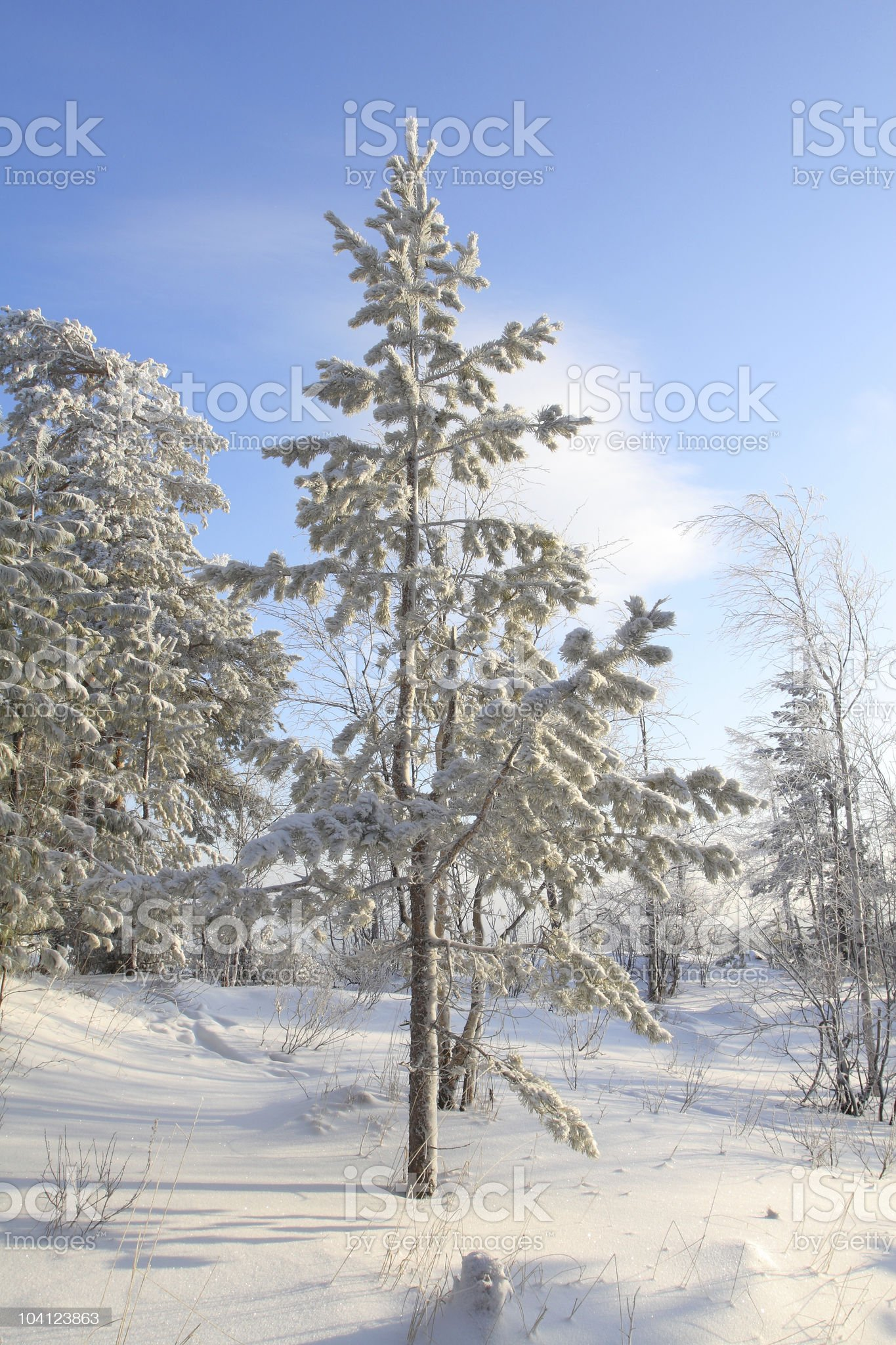 Under snow royalty-free stock photo