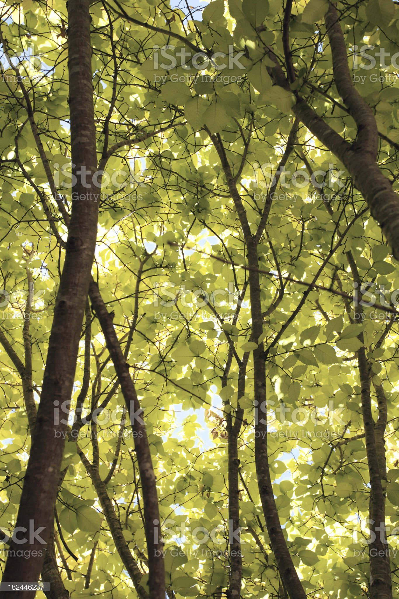 under the canopy royalty-free stock photo