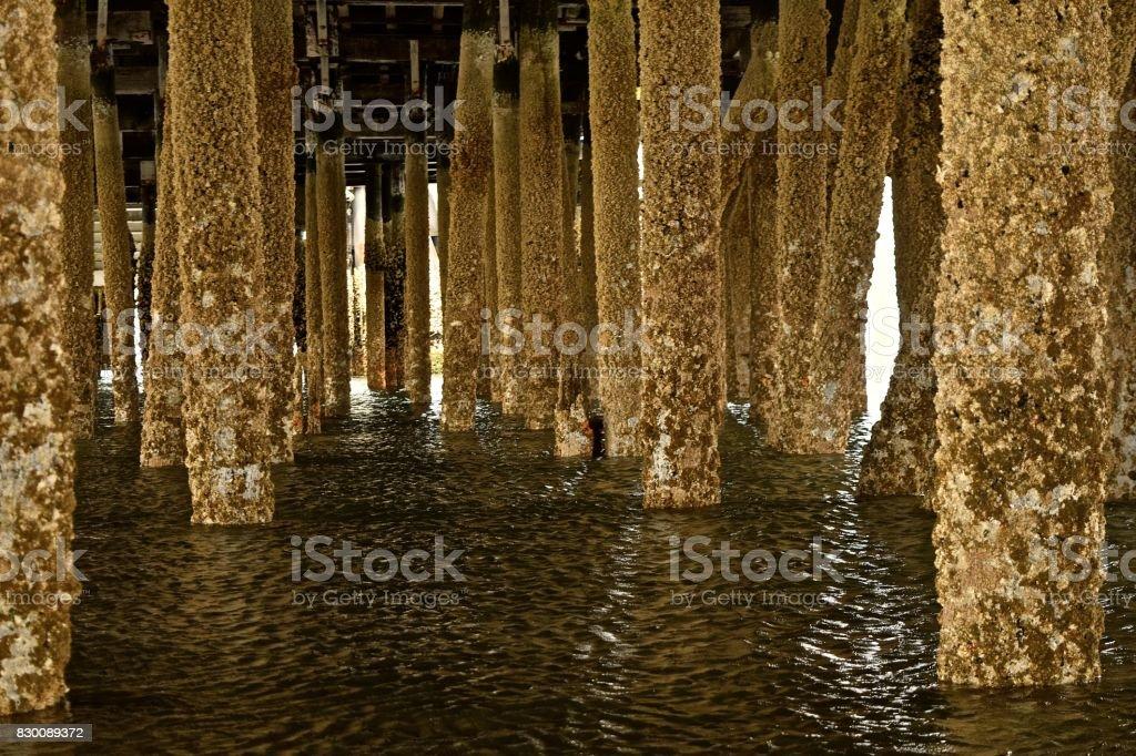 Under the Dock stock photo