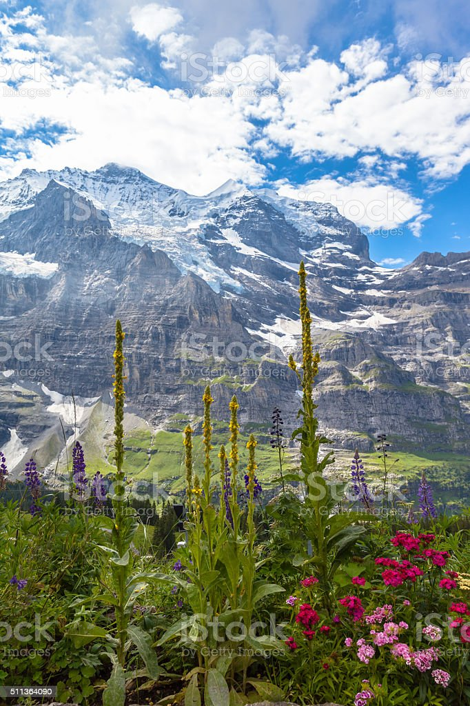 Under the feet of Jungfrau North face stock photo