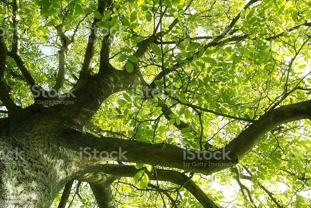 Under the greenwood tree royalty-free stock photo
