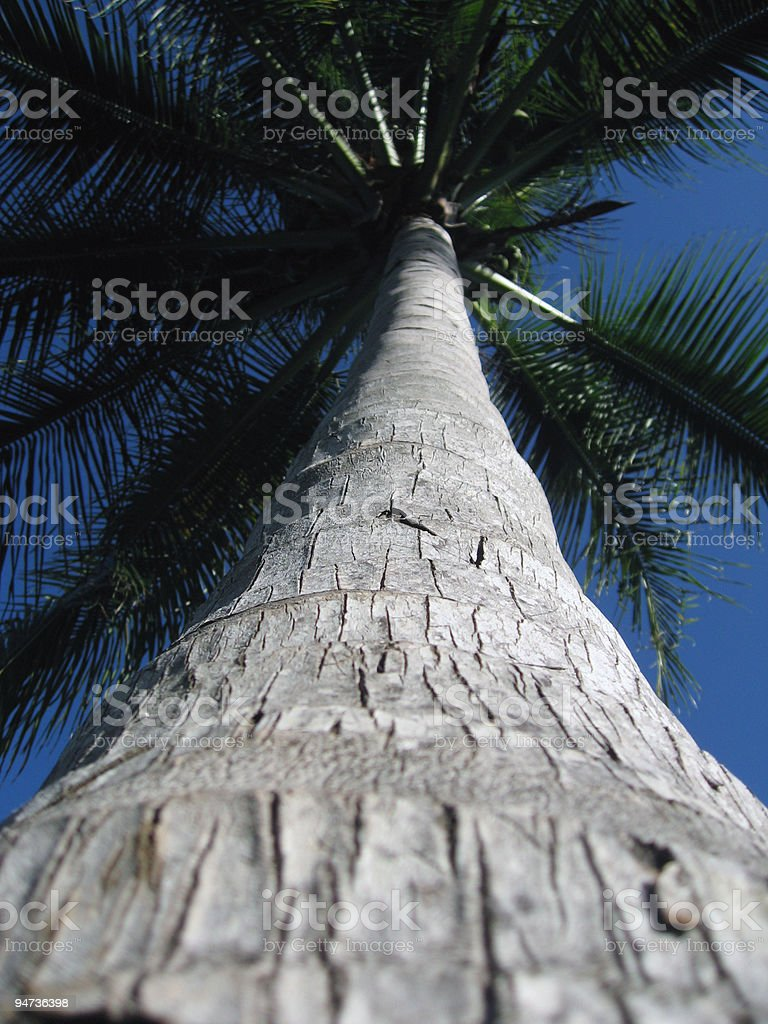 Under The Palmtree royalty-free stock photo