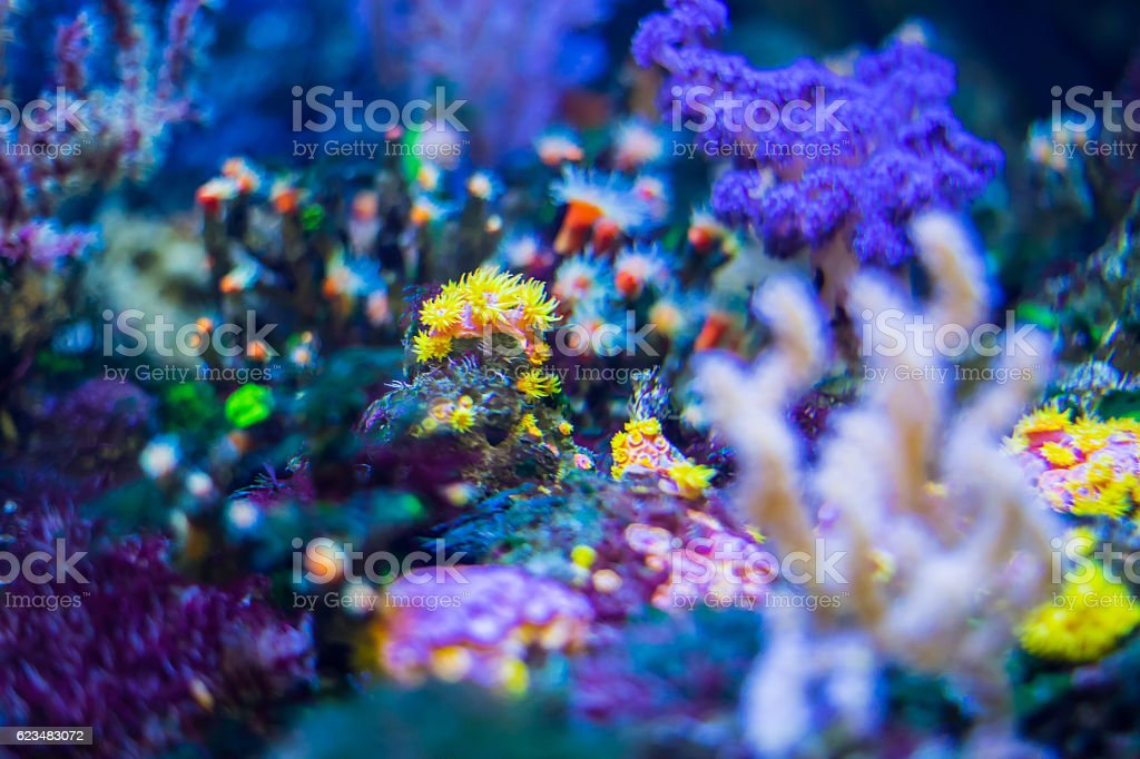 Under the Sea - Colorful Ocean Plants and Coral reef stock photo