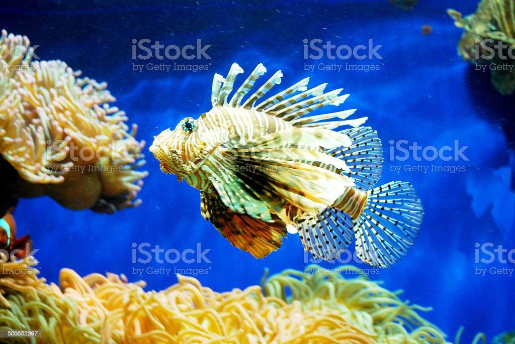 under the sea dangerous life stock photo