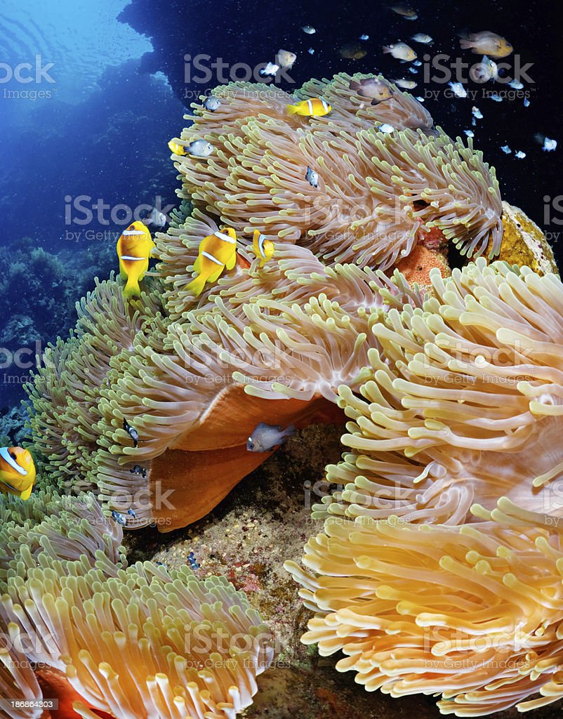 Under the Sea royalty-free stock photo