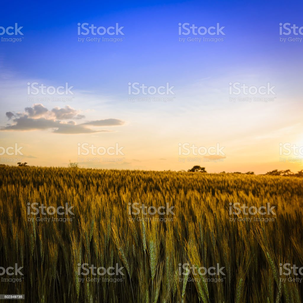 Under the setting sun catcher royalty-free stock photo