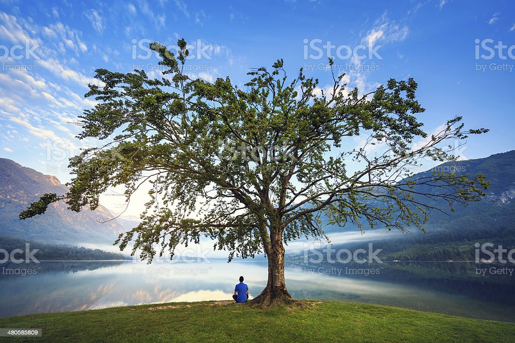 Under The Tree stock photo