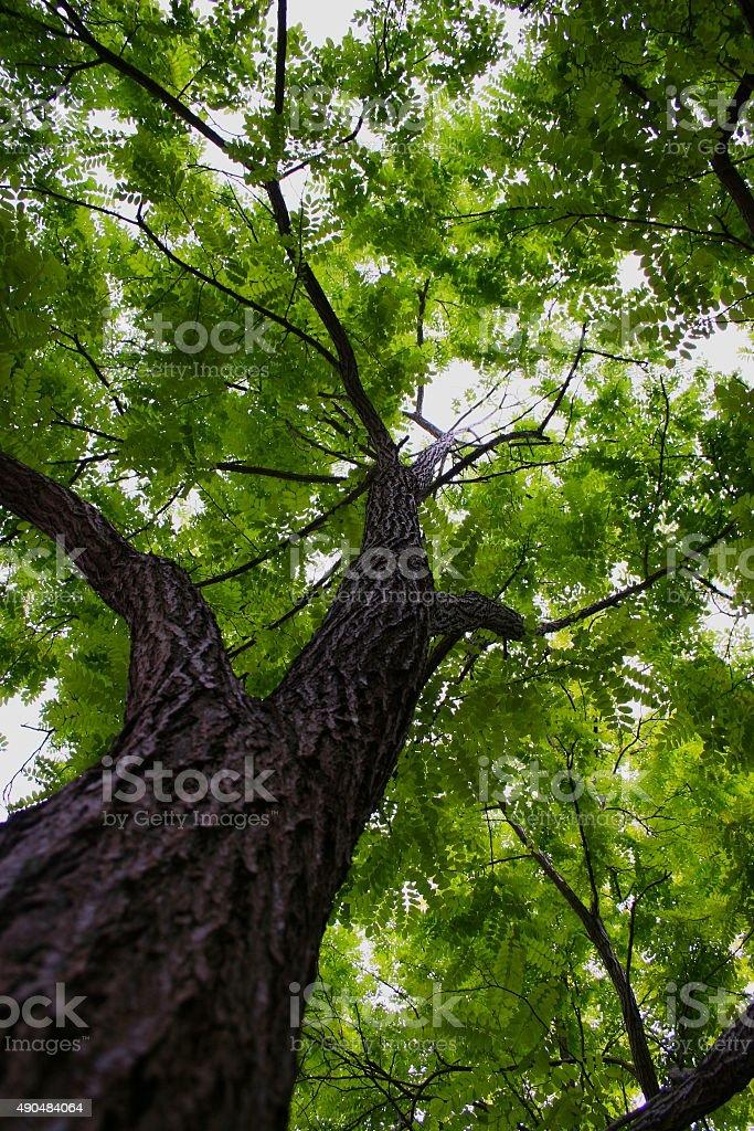 Under the tree stock photo