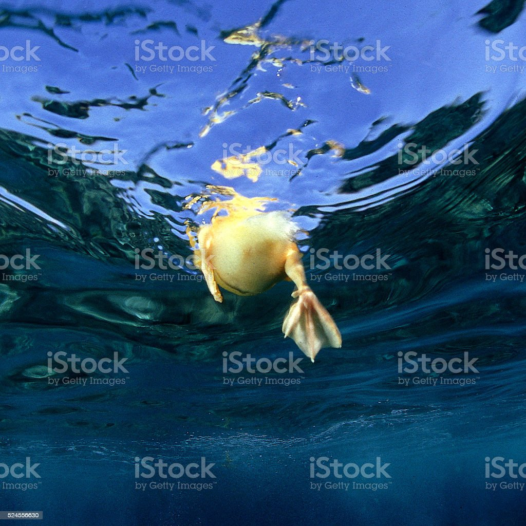 Under the water stock photo