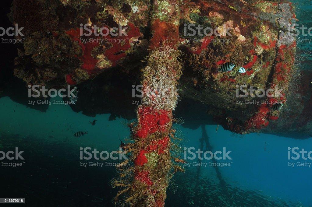 Under Tongan Beach Resort jetty stock photo