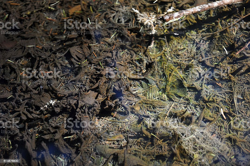 Under water of taiga brook stock photo