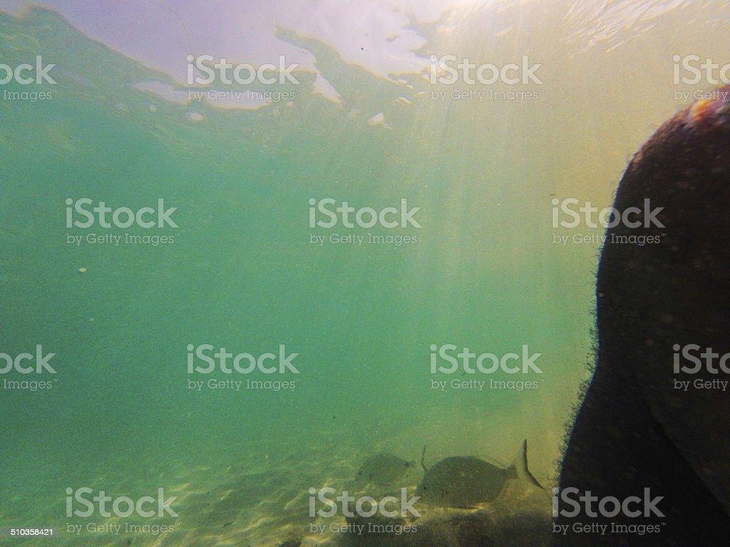 Piedi in acqua foto stock royalty-free