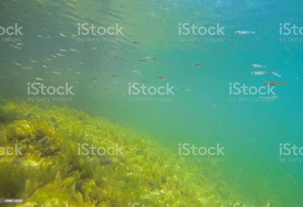 underewater royalty-free stock photo