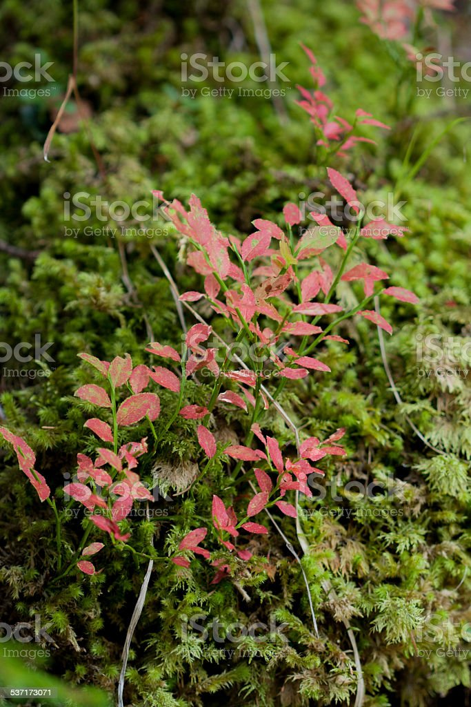 Undergrowth III stock photo