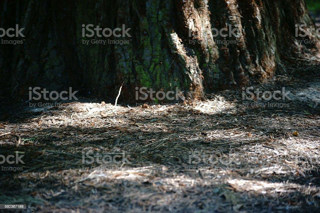 Undergrowth of a tree stock photo