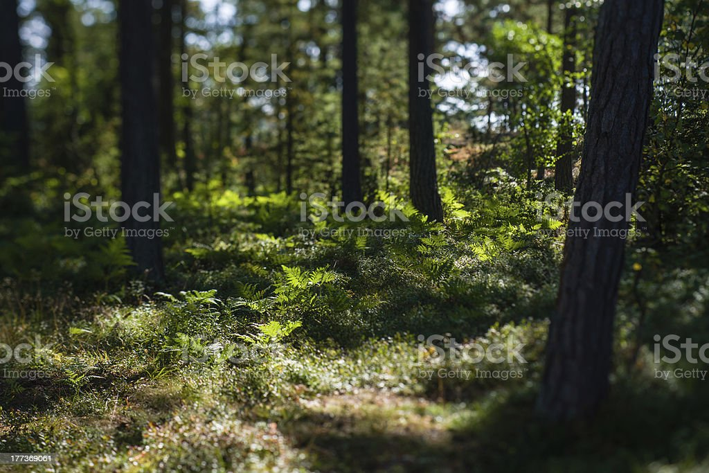 Undergrowth royalty-free stock photo
