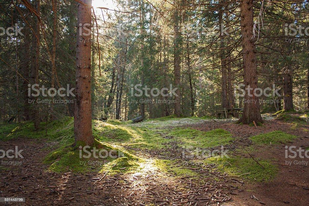 Undergrowth stock photo