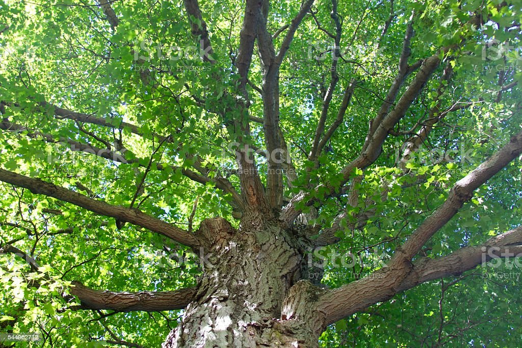Underneath a Tree stock photo
