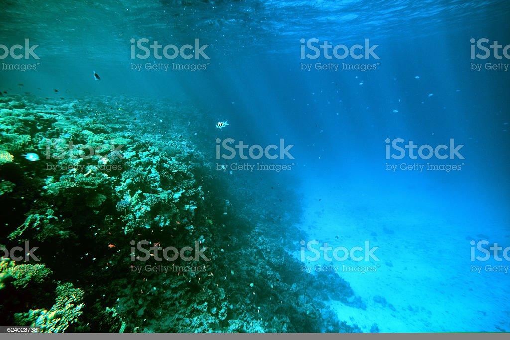 undersea background stock photo