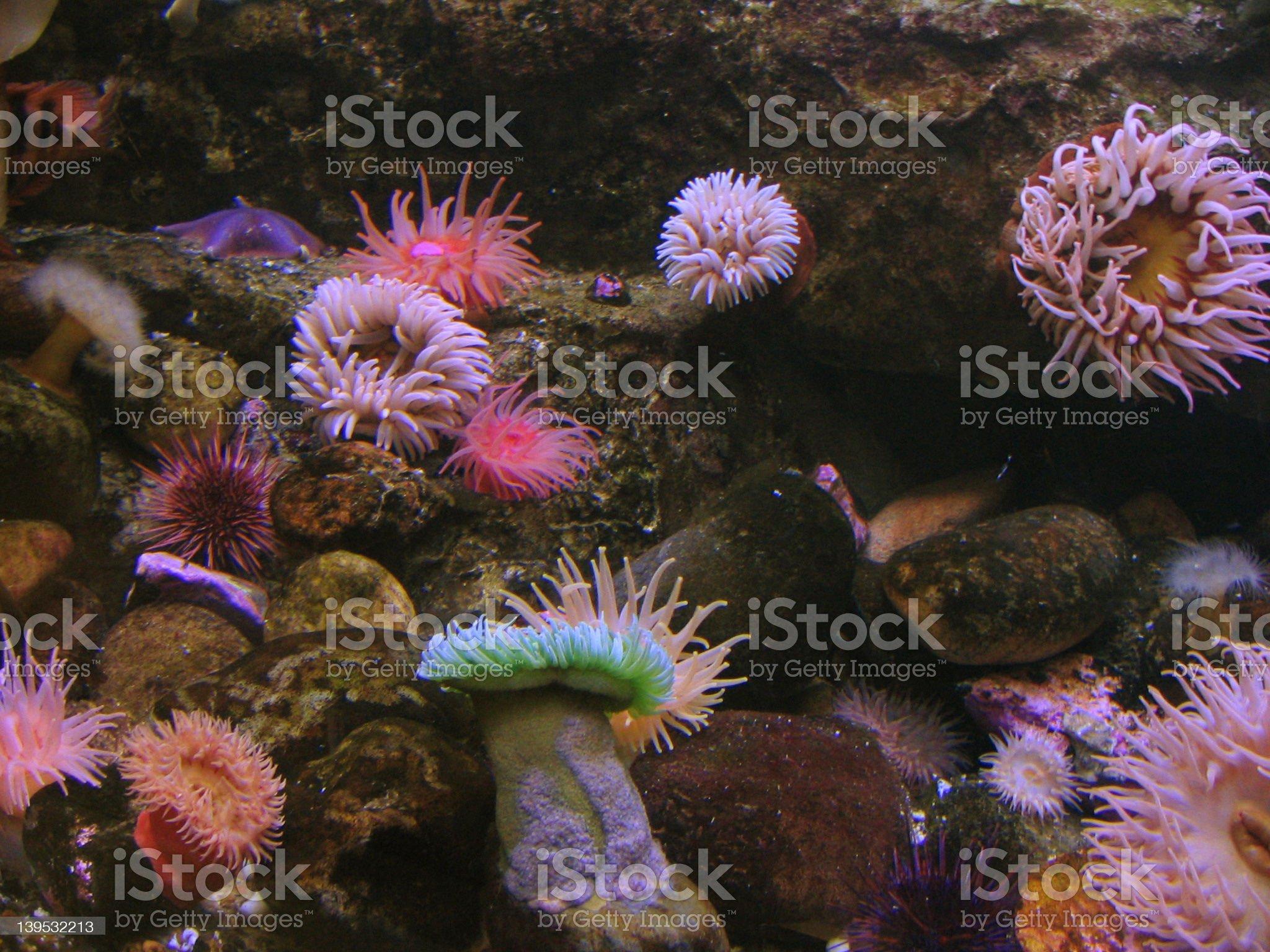 Undersea Life royalty-free stock photo