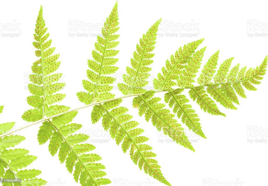 underside of a fern leaf stock photo