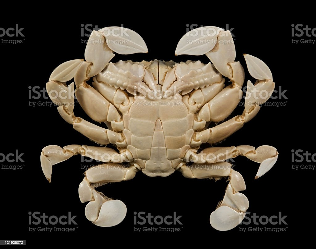 underside of a moon crab stock photo