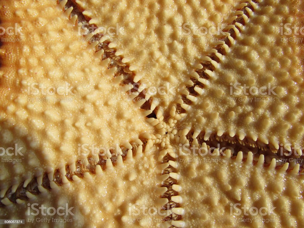 Underside of a sea star stock photo