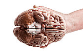 Underside View Of A Brain