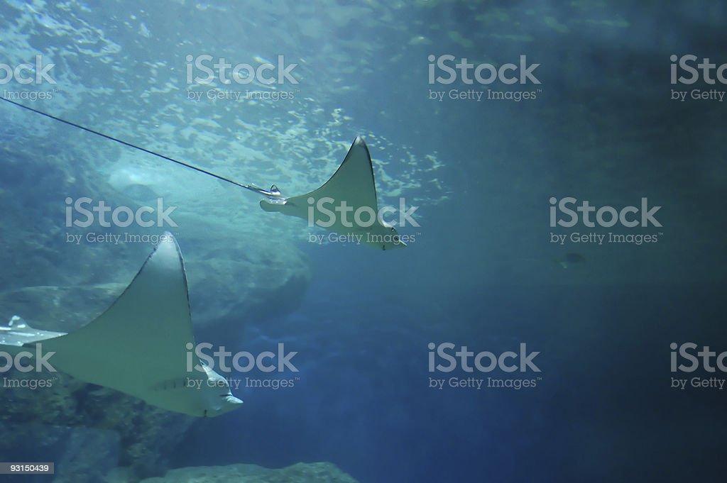 Underwater - #1 royalty-free stock photo