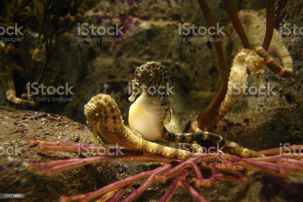 underwater #6 / 9 royalty-free stock photo