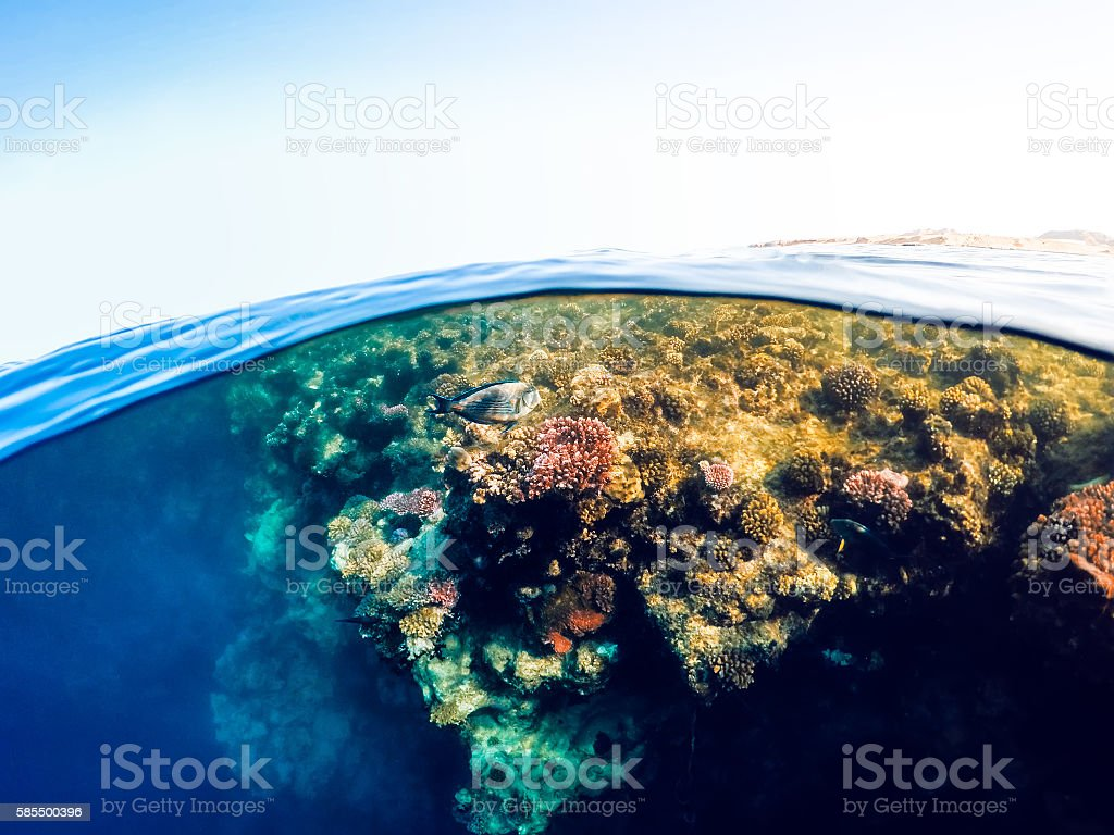 Underwater and surface split view in the tropics sea stock photo