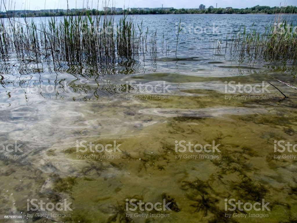 Underwater and surface world in one photo stock photo