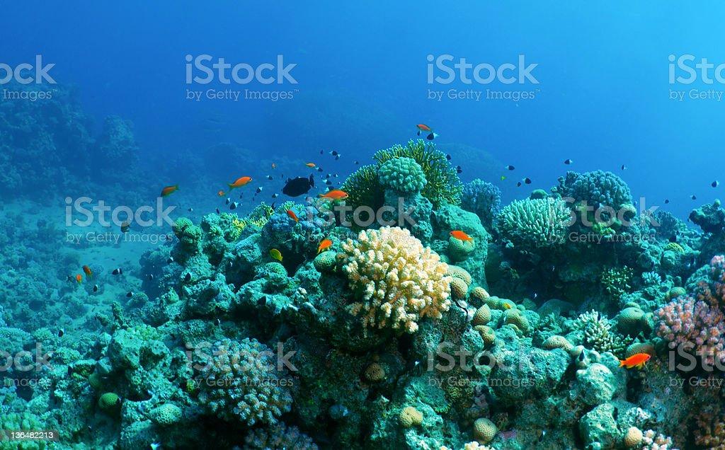 Underwater background royalty-free stock photo