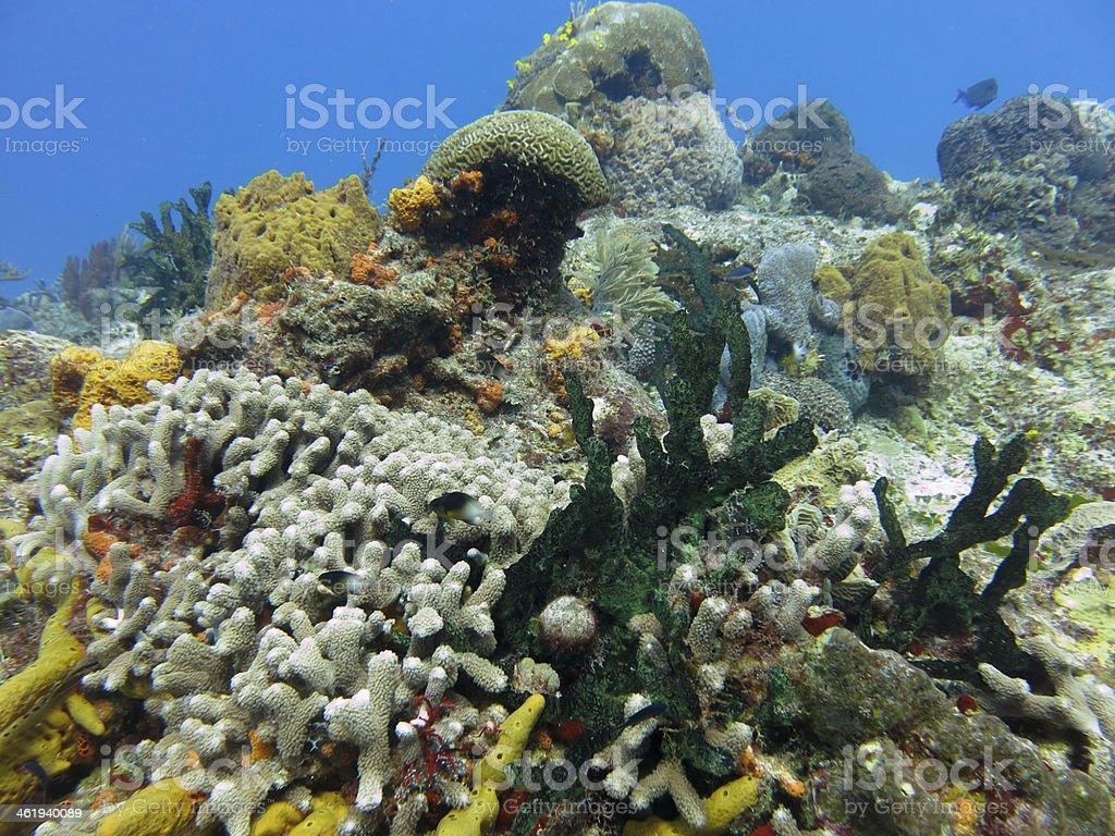 Underwater nature in the Caribbean sea