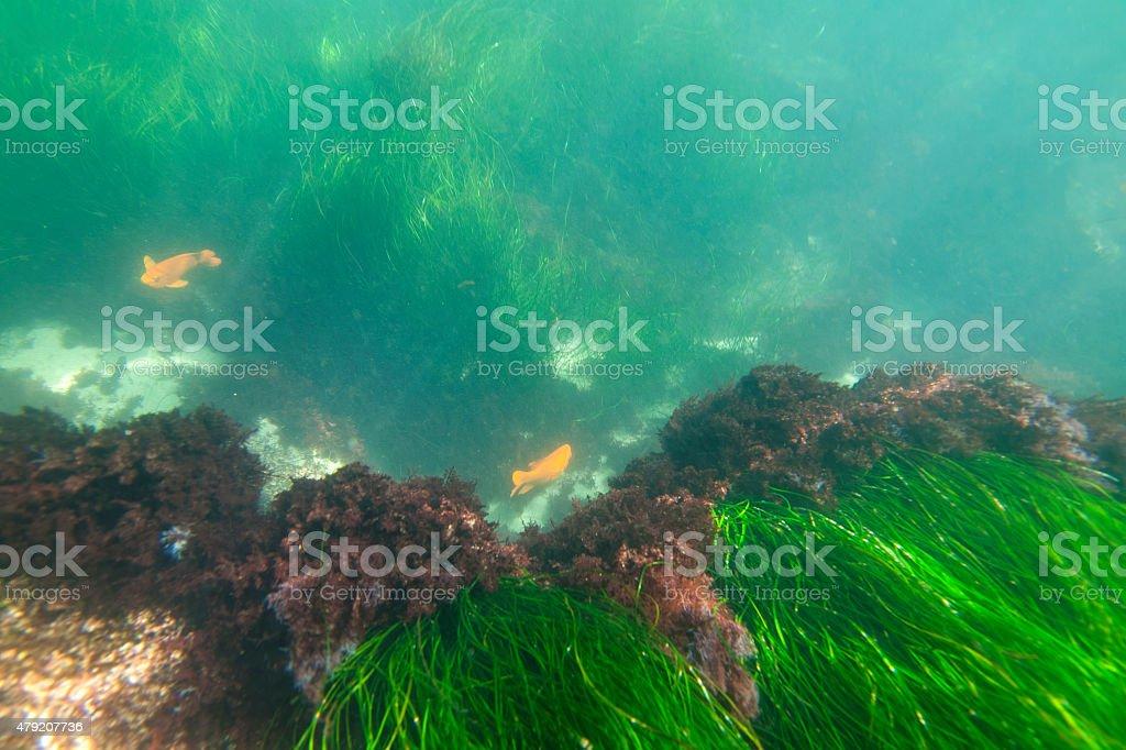 Underwater California stock photo
