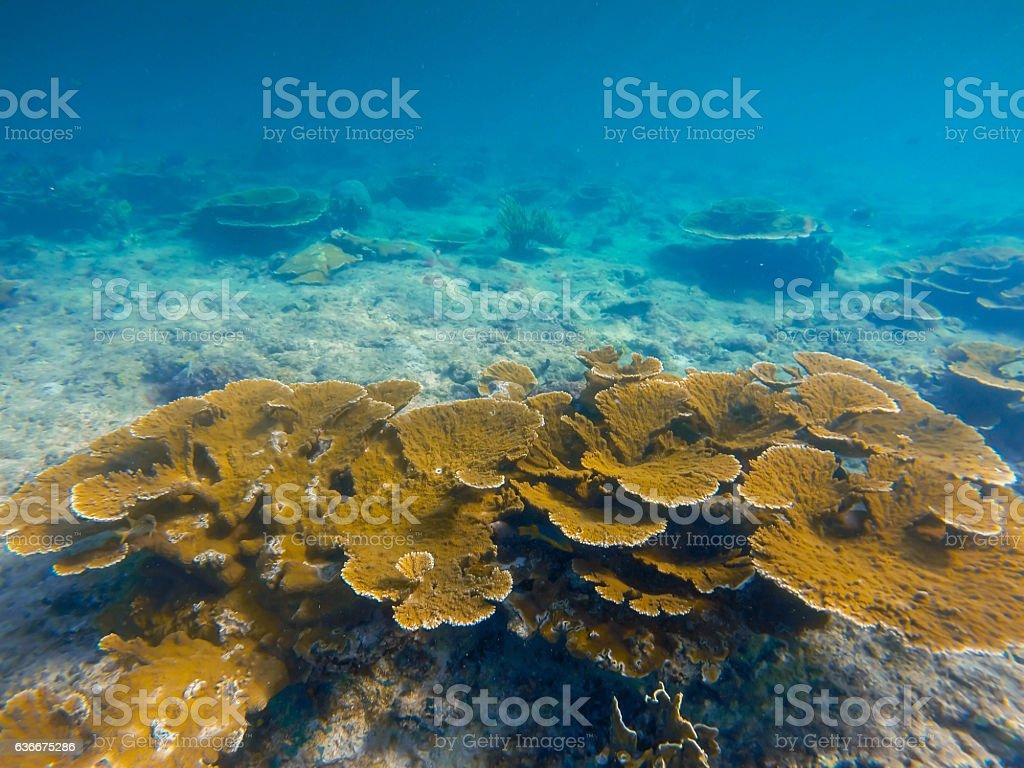 Underwater Caribbean coral reef, underwater landscape stock photo
