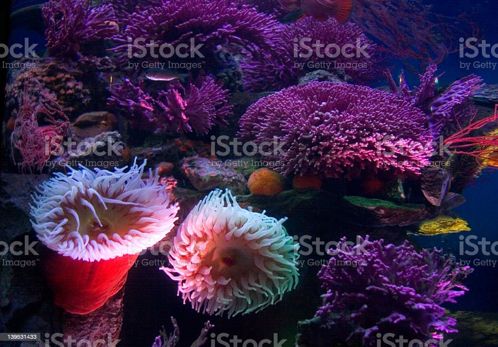 underwater city scape royalty-free stock photo