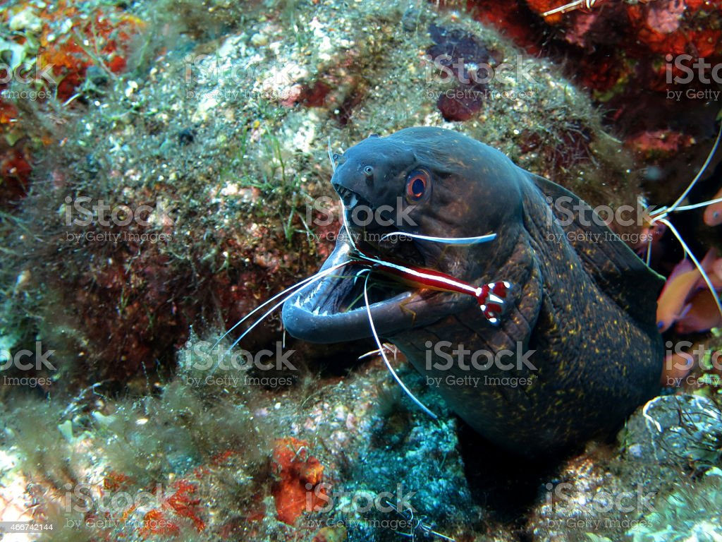 Underwater Cleaning Station stock photo