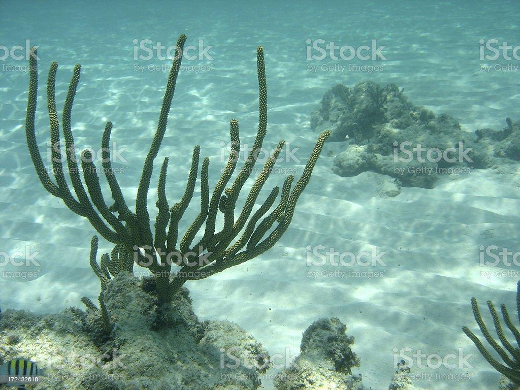 Underwater Coral Branch stock photo