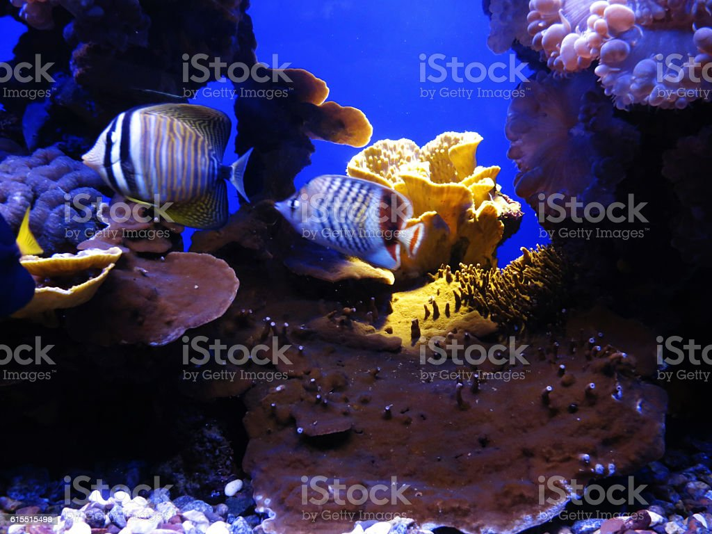 Underwater coral reef in red sea life stock photo
