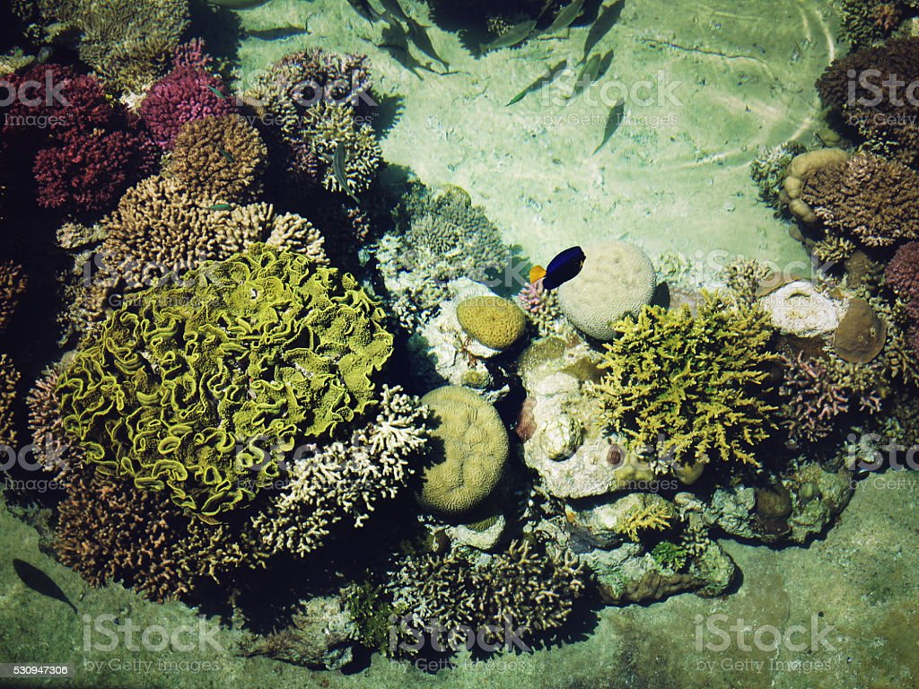 Underwater coral reef in red sea stock photo
